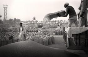 Récolte blé Punjab | Inde
